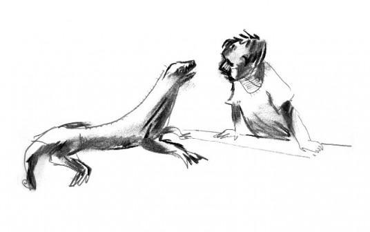 baillairge-iguana
